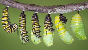 caterpillar-6